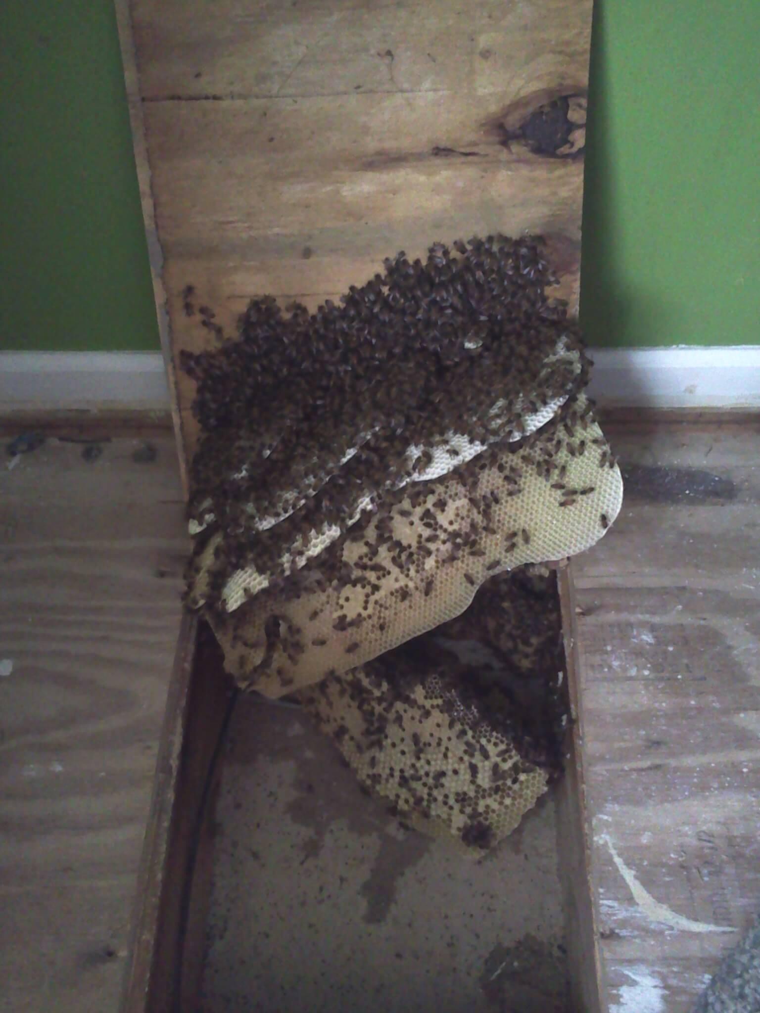 Live Honey Bee Removal Near Birmingham, AL - Southeast Bee Removal
