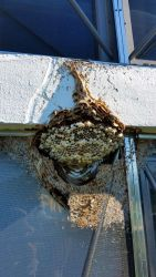 Hornet Nest Screen Window