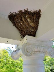 Honey Bee Colony Two Weeks