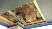 Athens honey bee removal 1