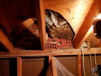 Removing Honey Bees From Chimney Saddle Above Attic