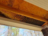 Honey Bee Removal From Ceiling Porch Jefferson