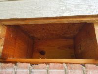 Entire Honey Bee Nest  Removed From Apartment Floor Joist