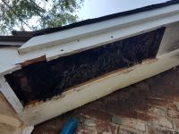b_200_200_16777215_00_images_files_Dead-out_honey_bee_removal_Talladega_2.jpg