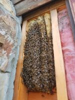b_200_200_16777215_00_images_files_Honey_Bee_Removal_from_Log_Cabin_McCaysville_2.jpg