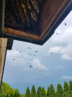 b_200_200_16777215_00_images_files_Macon_Honey_Bee_Removal_from_Bay_Window_1.jpg