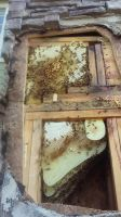 honeybees in stack stone apartment column Birmingham 2
