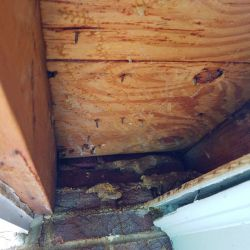 Bee Colony Removed Eaves Roswell