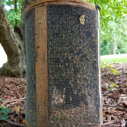 Live Honey Bees Cage Relocation