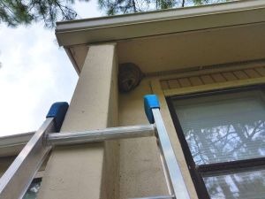 Hornet Nest Removal Sandy Springs