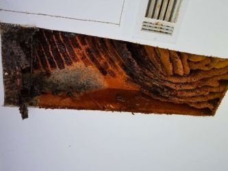 Honey Comb Fermenting Ceiling Damage