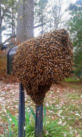 mail box bees